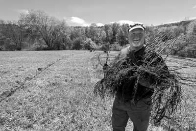 Kevin Maher, the co-founder of Agroforestry Management LLC, carries an armload of hazelnut tree seedlings, bred to be cold hardy, ready to be planted at his farm in Cambridge, N.Y. Maher and his business partner hope to get 4,000 acres of nut trees planted around the region within a decade. Joan K. Lentini photo